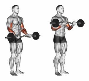 Korrekt utførelse av bicepscurls