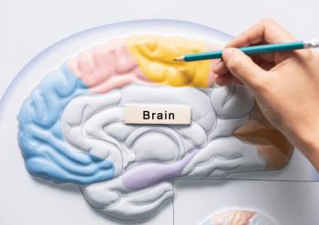 Hold hjernen i form illustrasjon