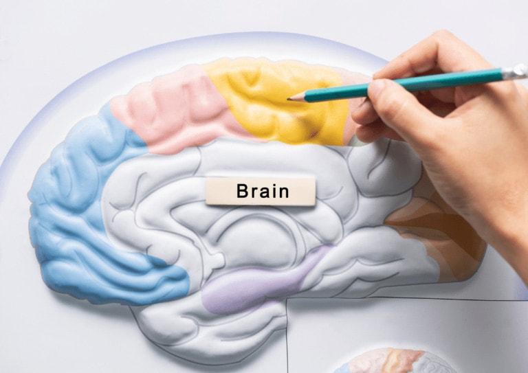Hold hjernen i form