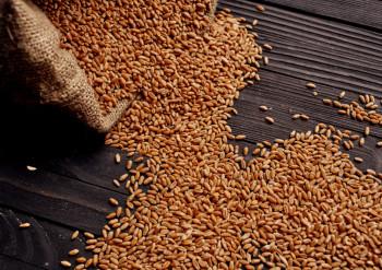 Korn protein