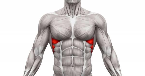 Serratus Anterior, hvorfor trene push-ups